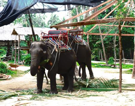 タイ・サムイパンガン1303 329