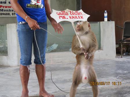 タイ・サムイパンガン1303 734
