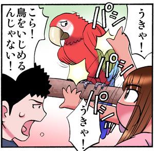 toriijime.jpg