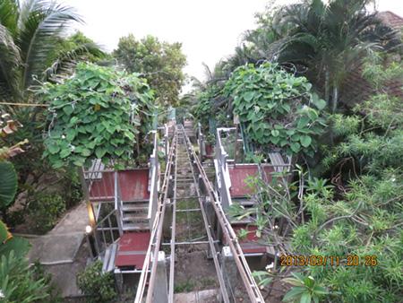 タイ・サムイパンガン1303 204
