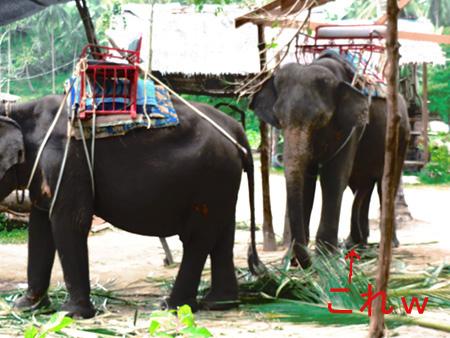 タイ・サムイパンガン1303 330