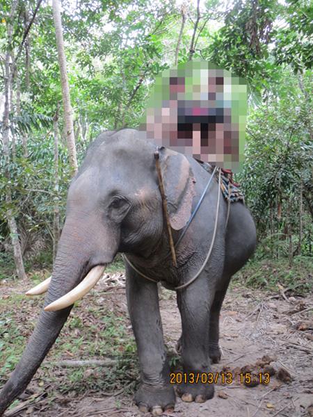 タイ・サムイパンガン1303 345