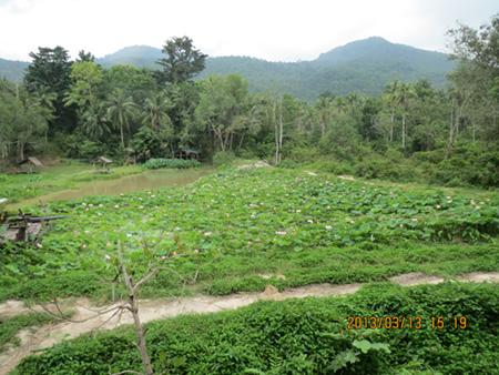 タイ・サムイパンガン1303 354
