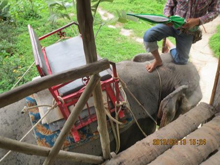 タイ・サムイパンガン1303 362