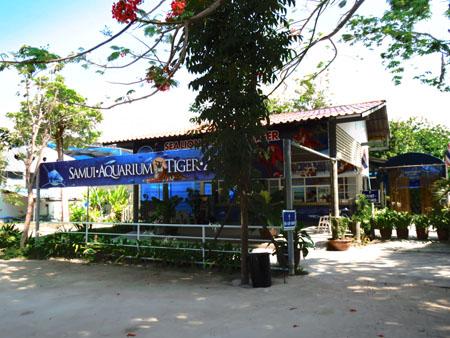 タイ・サムイパンガン1303 456