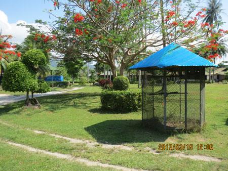 タイ・サムイパンガン1303 465