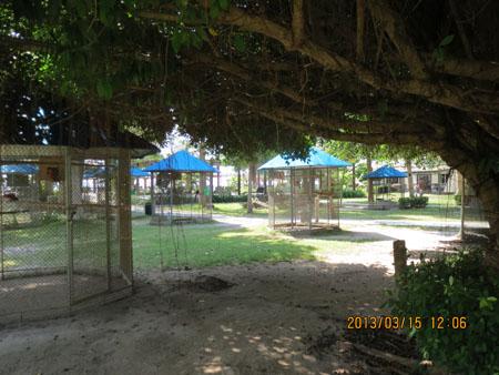 タイ・サムイパンガン1303 464