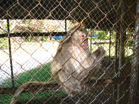 タイ・サムイパンガン1303 460