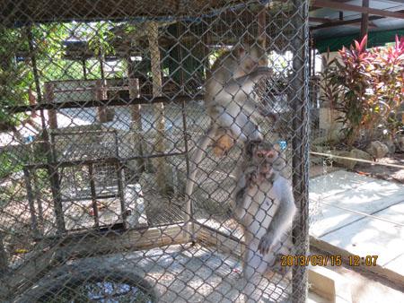 タイ・サムイパンガン1303 466