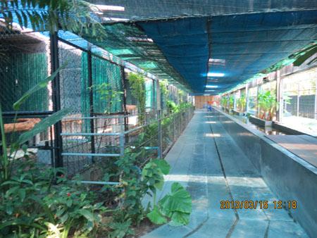 タイ・サムイパンガン1303 479