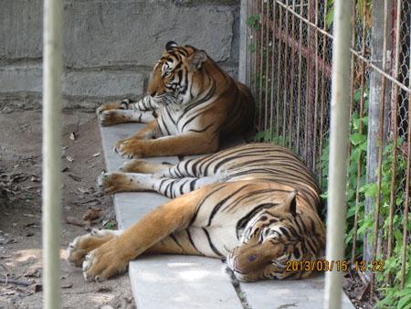 タイ・サムイパンガン1303 487