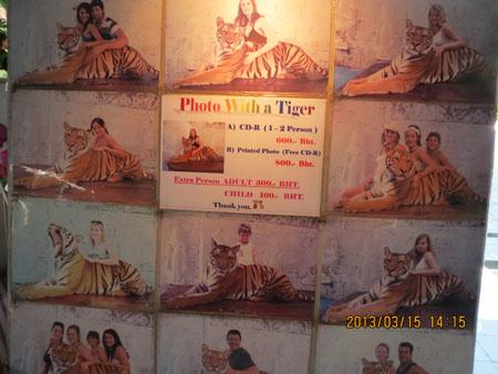 タイ・サムイパンガン1303 514
