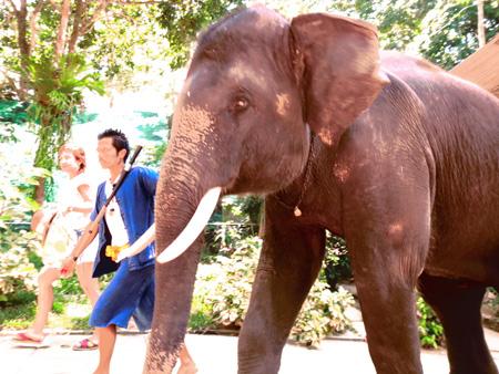 タイ・サムイパンガン1303 625