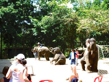 タイ・サムイパンガン1303 626