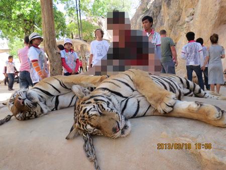タイ・サムイパンガン1303 920