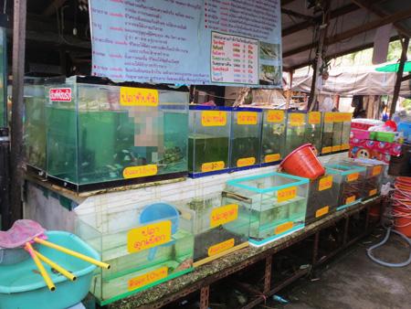 phuket140106 084