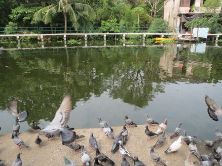 phuket140106 085