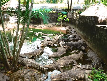 phuket140106 274