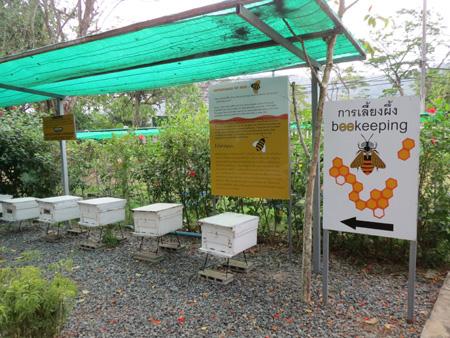 phuket140106 322