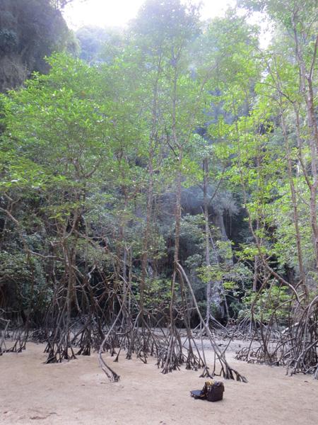 phuket140106 662